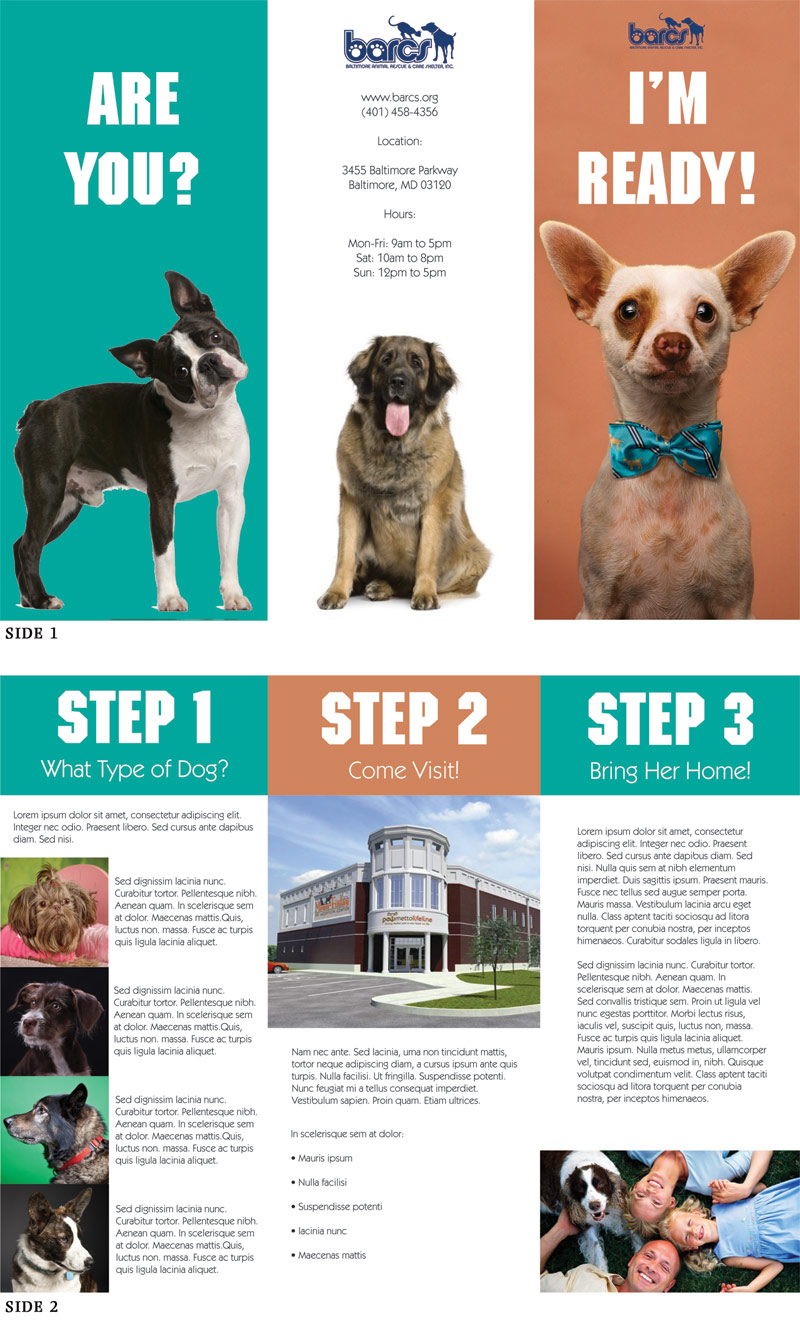 dog shelter brochure design