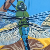 Dragonfly-closeup
