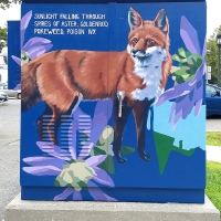 Red Fox and Wood Aster box