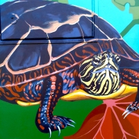turtle-closeup