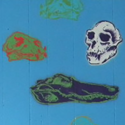 close up of a skull mural