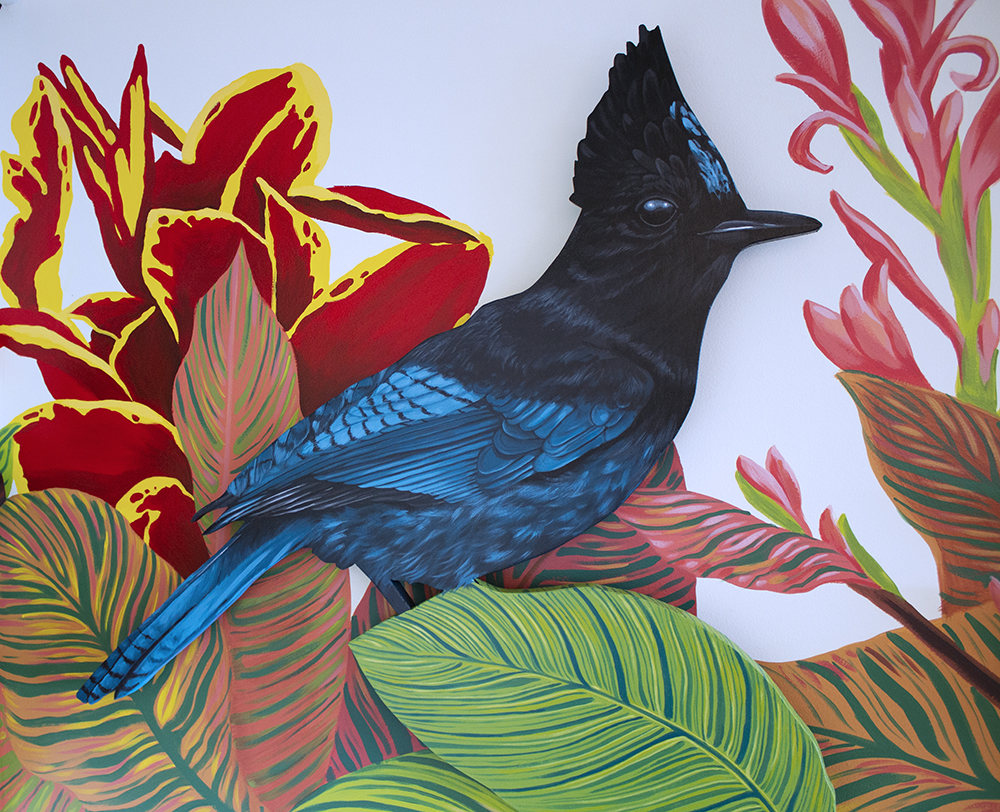 Steller's jay detail by Sophy Tuttle